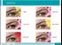 Sophistic Renkli Lens Numaralı resmi